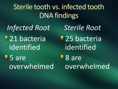 sterile vs. infected tooth root