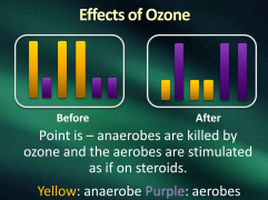 effects of ozone