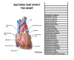 bacteria that affect the heart
