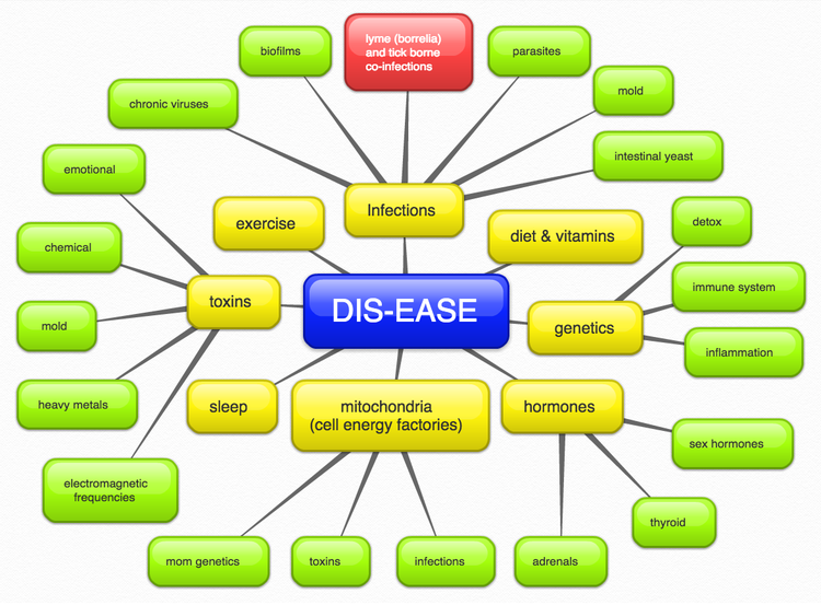 whole health diagram