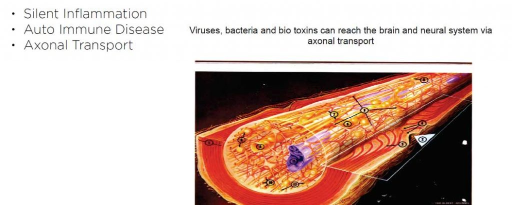 axonal transport of pathogens