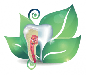 tooth on a green leaf
